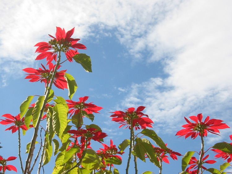 Red flowers against blue sky