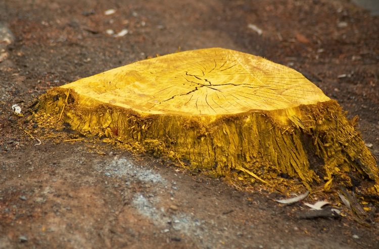A bright yellow tree stump