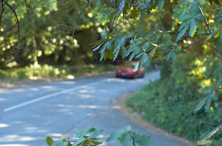 A car approaches a leafy street corner in the Adelaide Hills