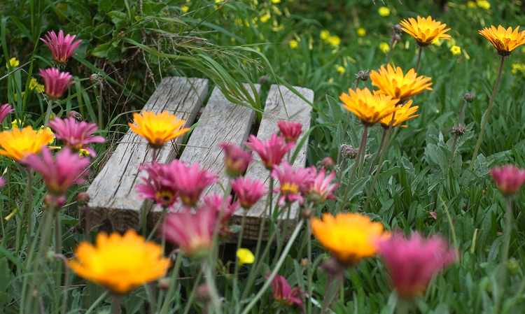 A wooden garden seat, nestled amongst flowers