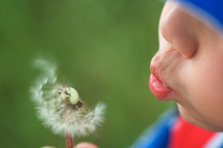 Michael blows the seeds from a dandelion flower