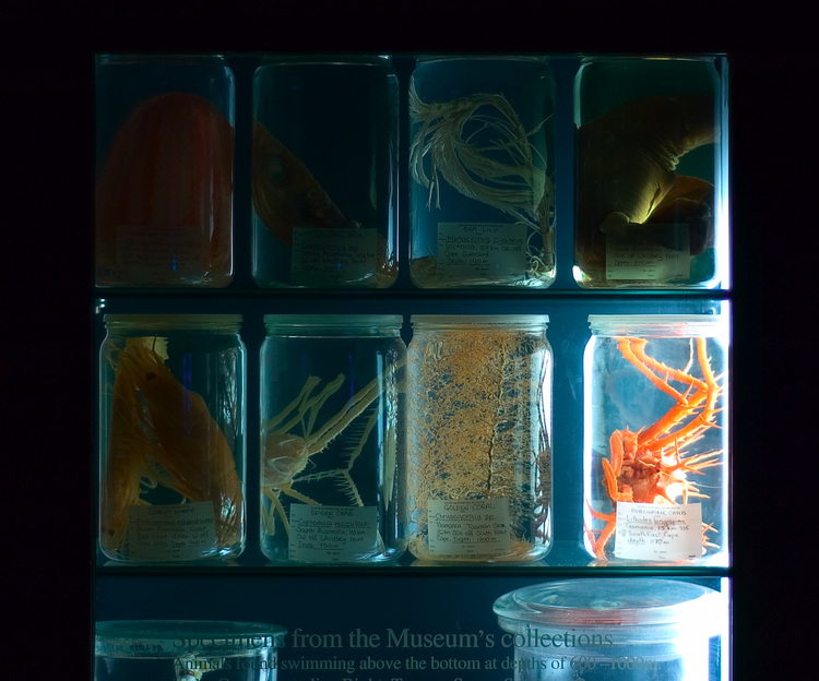 Deep sea specimens in glass display jars