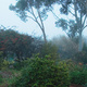 The garden on a misty morning